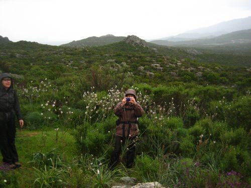 mégalithisme en corse,monte revincu,cima di suarella,dolmen de celluccia