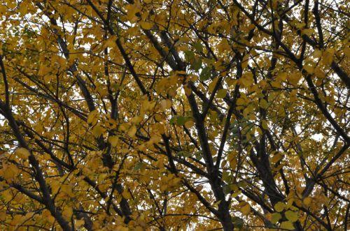 calligraphie d'automne copie.jpg