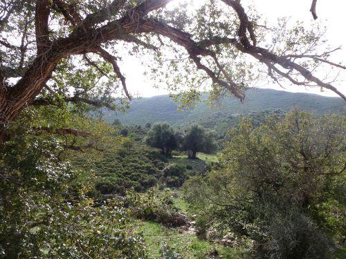 le vallon d'Ifana à travers l'orme.jpg
