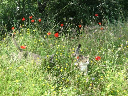 chats en fleurs.jpg