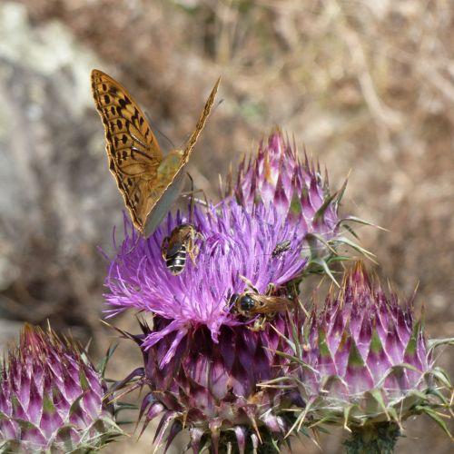 chardons papillons abeilles 1.jpg