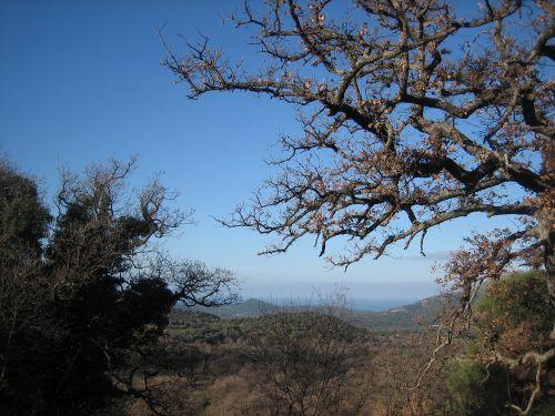 arbres et plaine blog.jpg