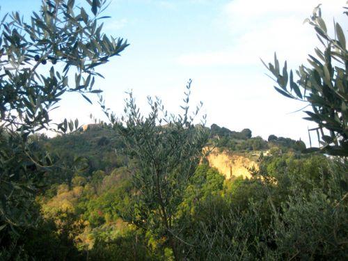 Volterra , e Balze et oliviers.jpg