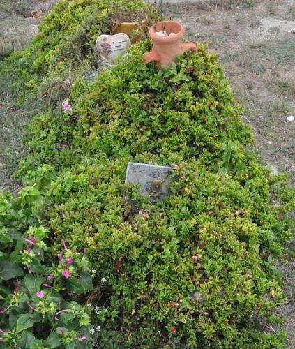 Bonifacio édredon fleuri blog.jpg