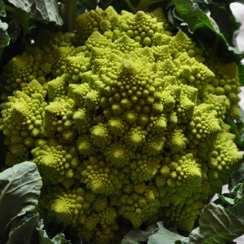 Romanesco 2 blog.jpg