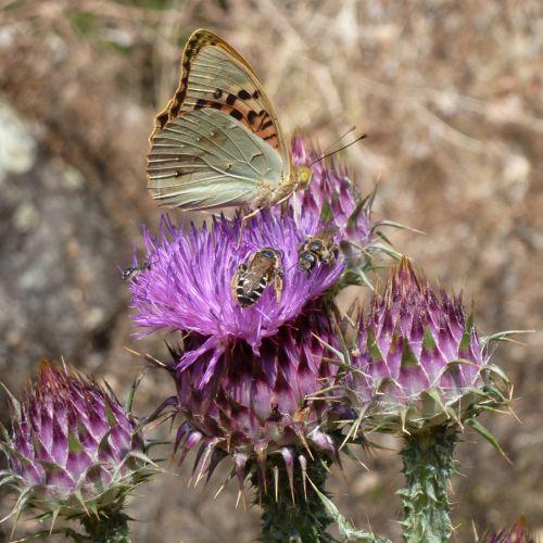chardons papillons abeilles 2.jpg