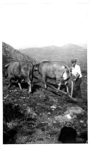 19.labour en montagne.jpg