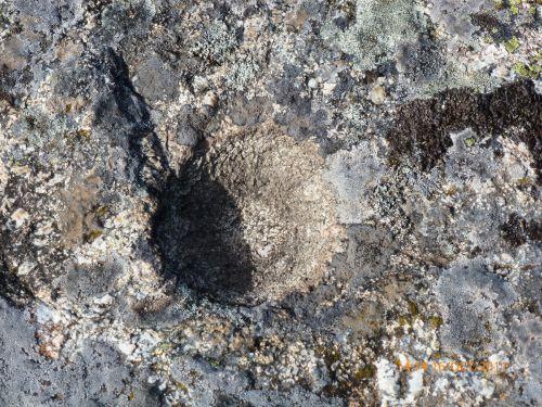 cupule sur rocher sommital.jpg